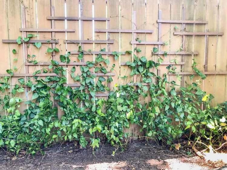 5. DIY Garden Trellis