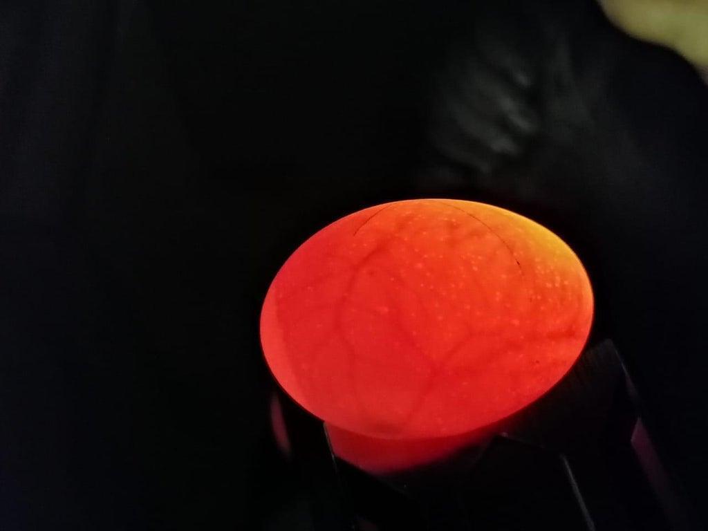 6. Egg Incubator DIY