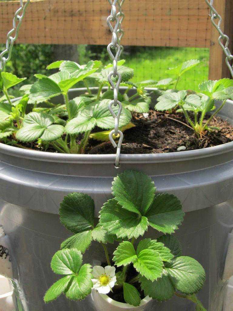 6. How To Make A Strawberry Planter