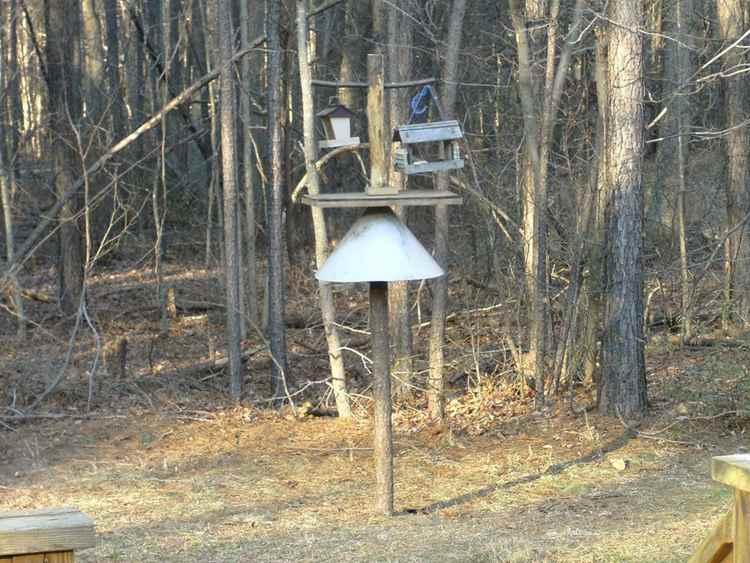 8. DIY Bird Feeding Station With Squirrel Baffle