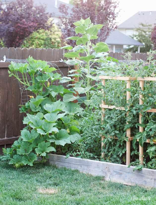 9. DIY Tomato Cage