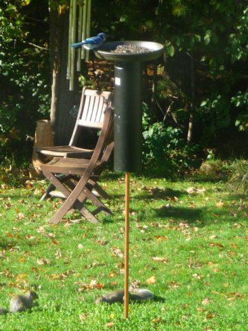 DIY Squirrel Baffle Ideas