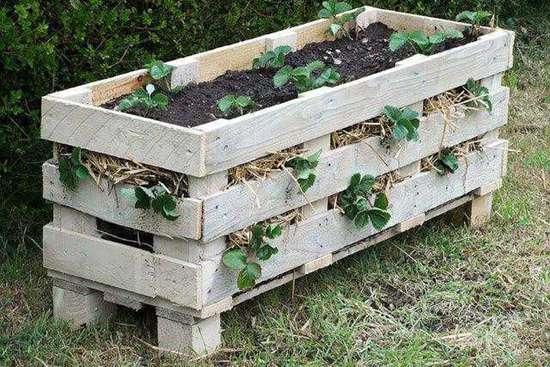 DIY Strawberry Planter Ideas