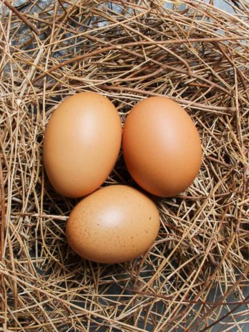 Homemade Egg Incubator Ideas