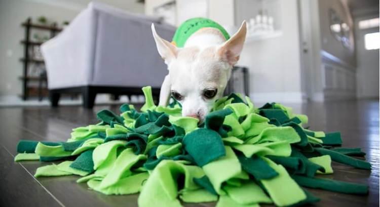 14. DIY Snuffle Mat Dog Toy