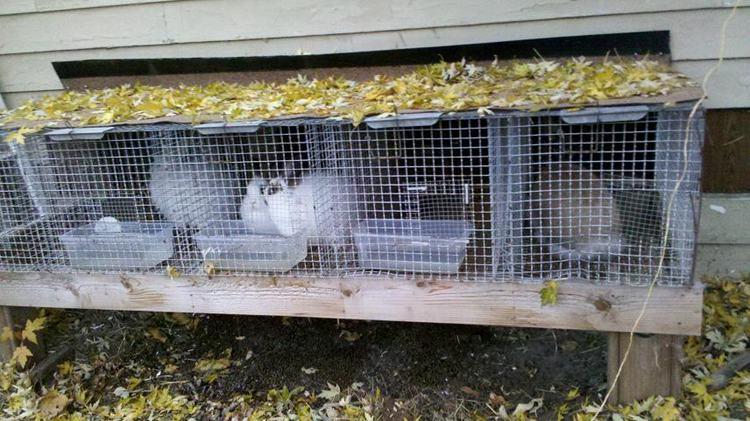 4. IndoorOutdoor Rabbit Hutch