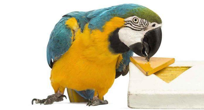 6. DIY Parrot Toys
