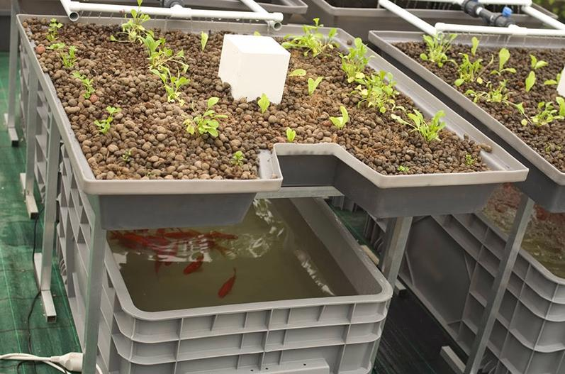 9. How To Grow With Aquaponics