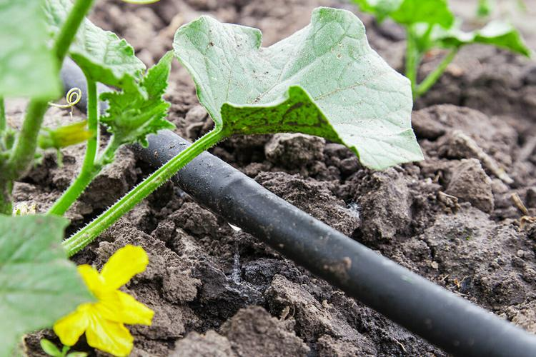10. How To Build A Drip Irrigation System