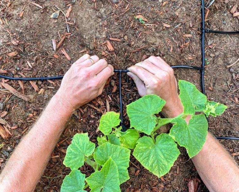 11. DIY Drip Irrigation System