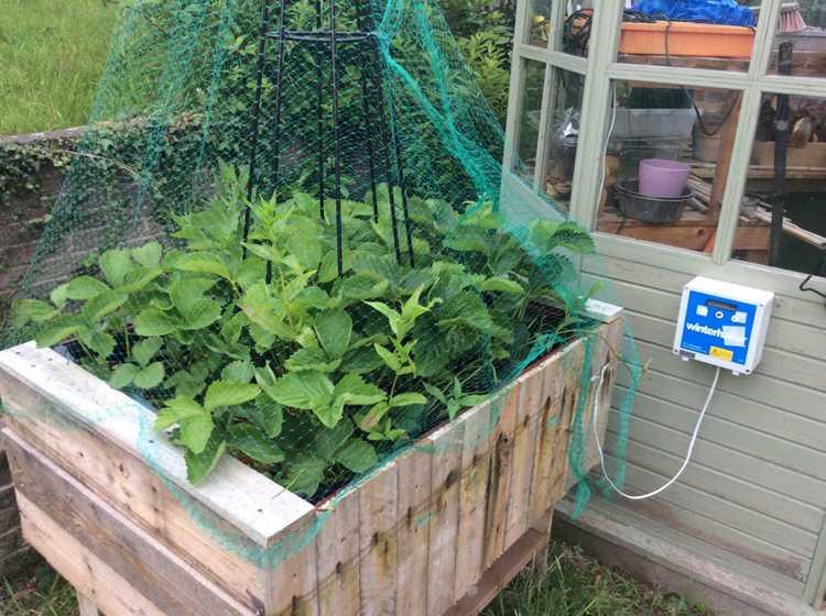 14. Raised Bed Electric Slug Fence