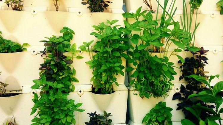 15. DIY Indoor Vertical Herb Garden