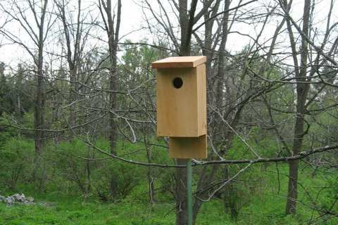 15. Eastern Bluebird House From Hand Tools