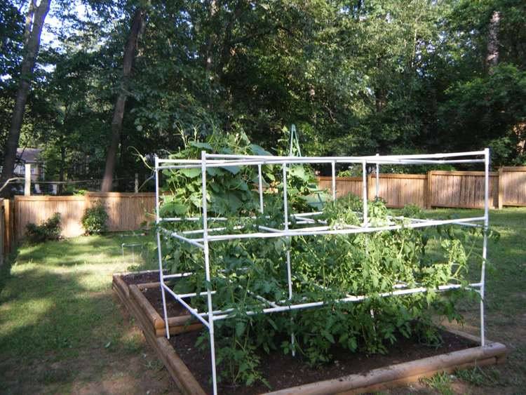 17. DIY Tomato Cage With PVC Pipe
