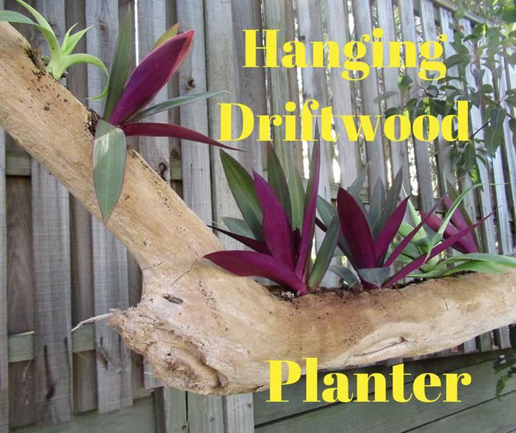20. DIY Hanging Driftwood Planter