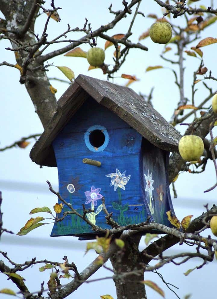 25 DIY Bluebird House Plans To Build In Your Spare Time