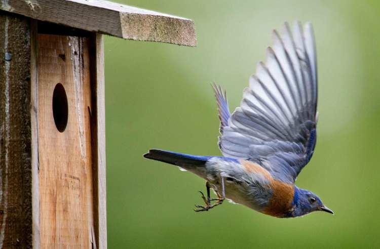 5. How To Build A Bluebird Nestbox