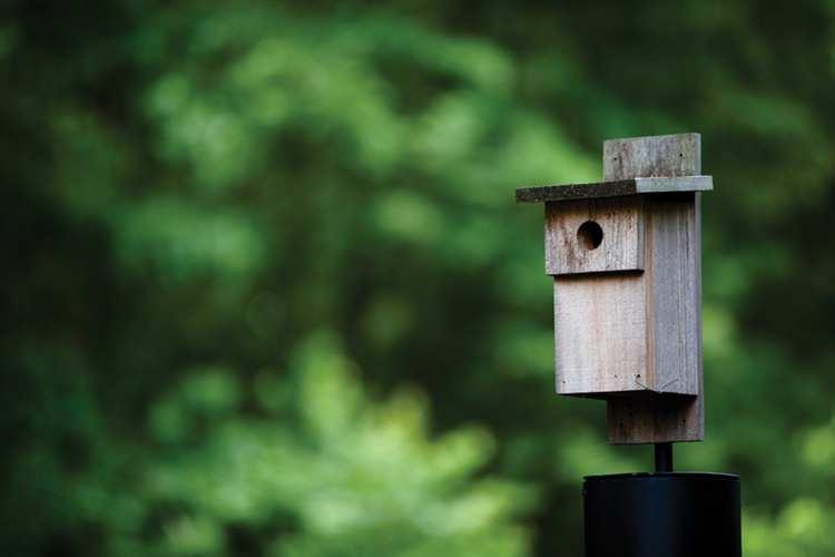 6. DIY Build Bluebird Box