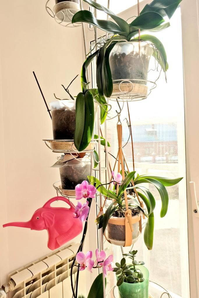 6. DIY Hanging Leather Planter