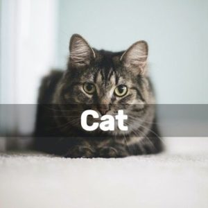 Diy Projects For Cat