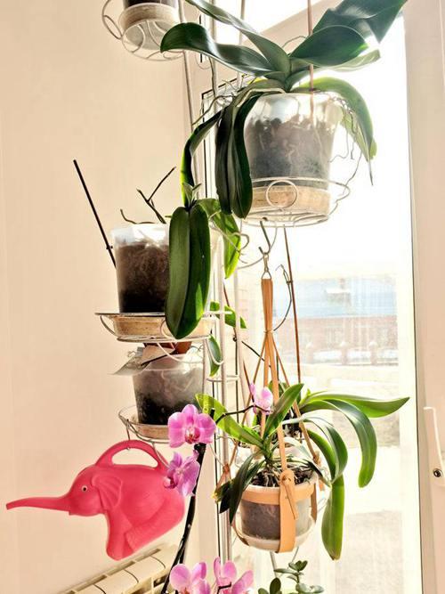 DIY Hanging Planter Ideas