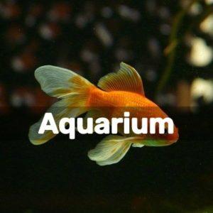 Diy Projects For Aquarium