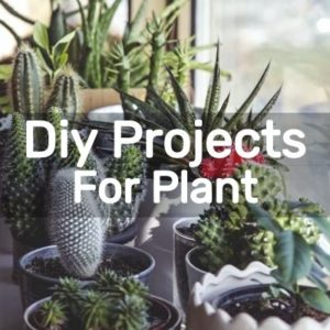 Diy Projects For Plant