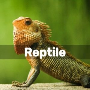 Diy Reptile Projects