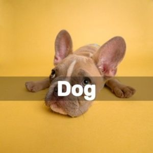 Diy Projects For Dog