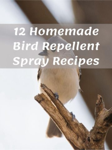12 Homemade Bird Repellent Spray Recipes