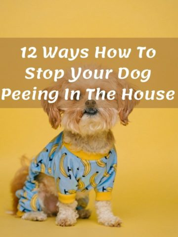 12 Ways To Keep Dog From Peeing In The House For Good
