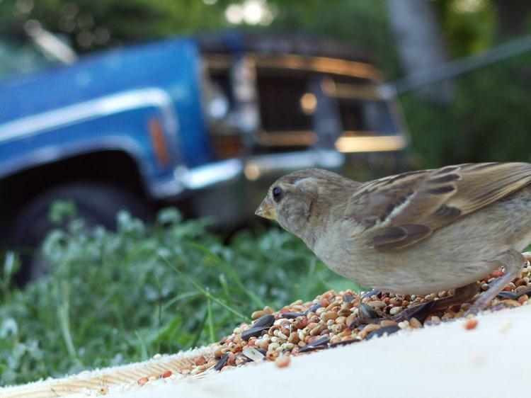 12. DIY Bird Photo Booth