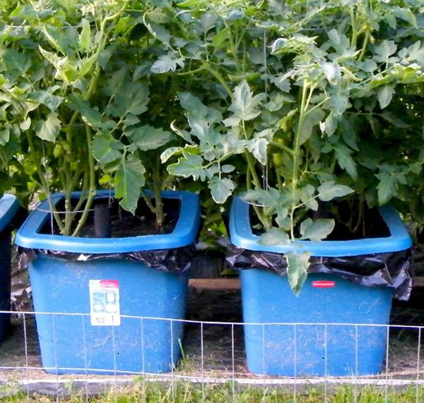12. How To Build Self Watering Containers