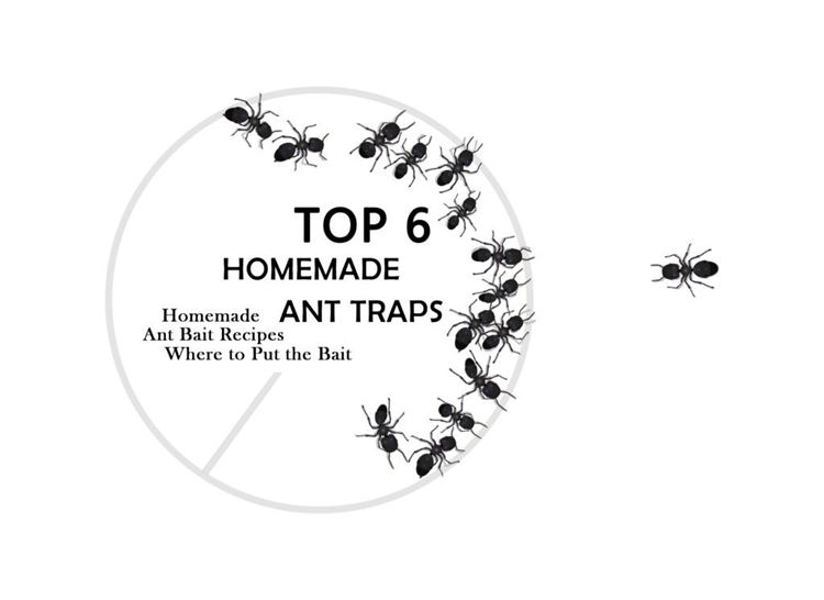 16. DIY Ant Trap Guideline