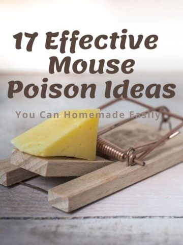 17 Effective Homemade Mouse Poison Ideas
