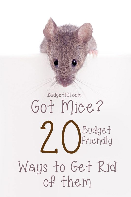 17. Directory of Mouse Prevention