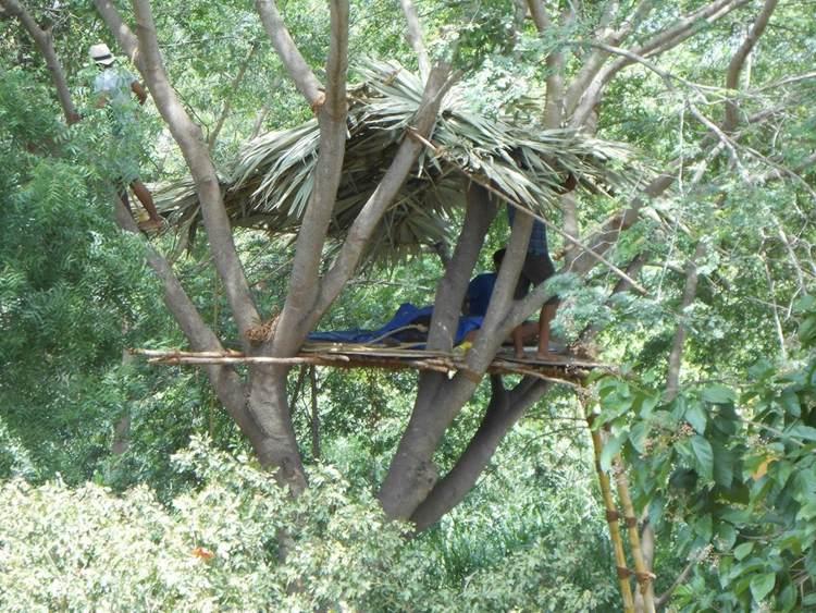 2. DIY Cheap Tree House Build