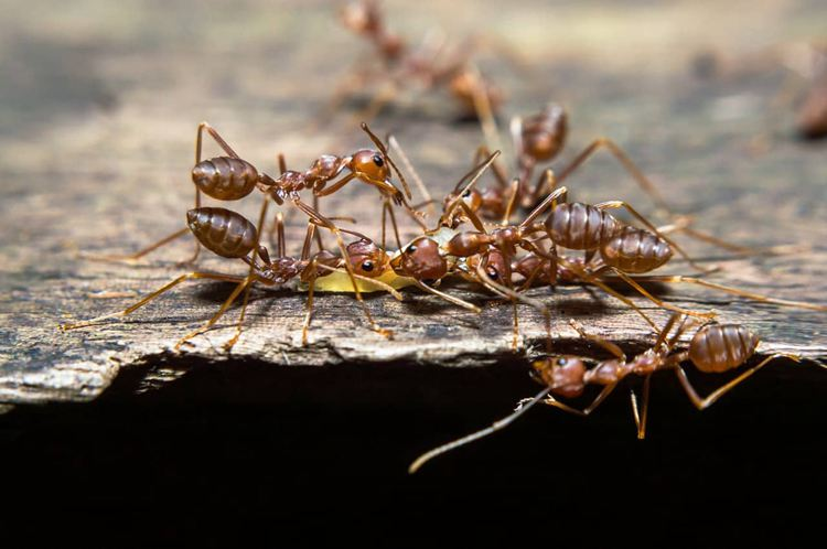 20. Everything on Ant Traps