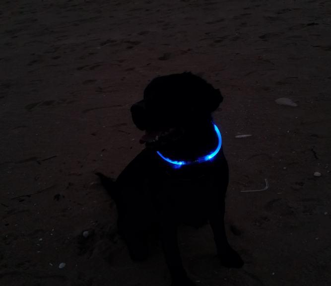 21. LED Dog Collar DIY
