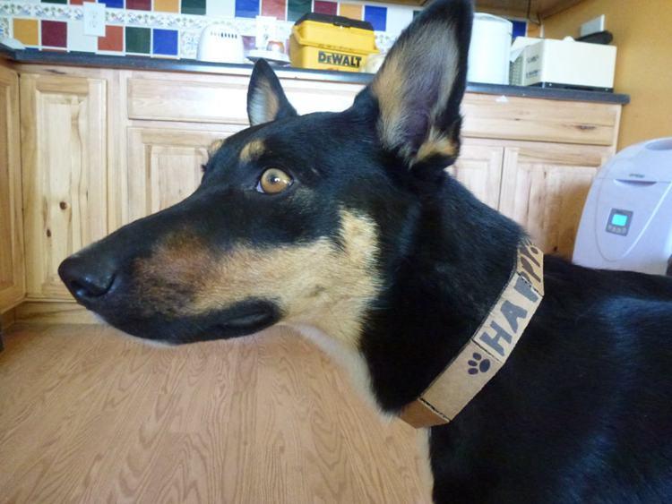 23. DIY Cardboard Dog Collar
