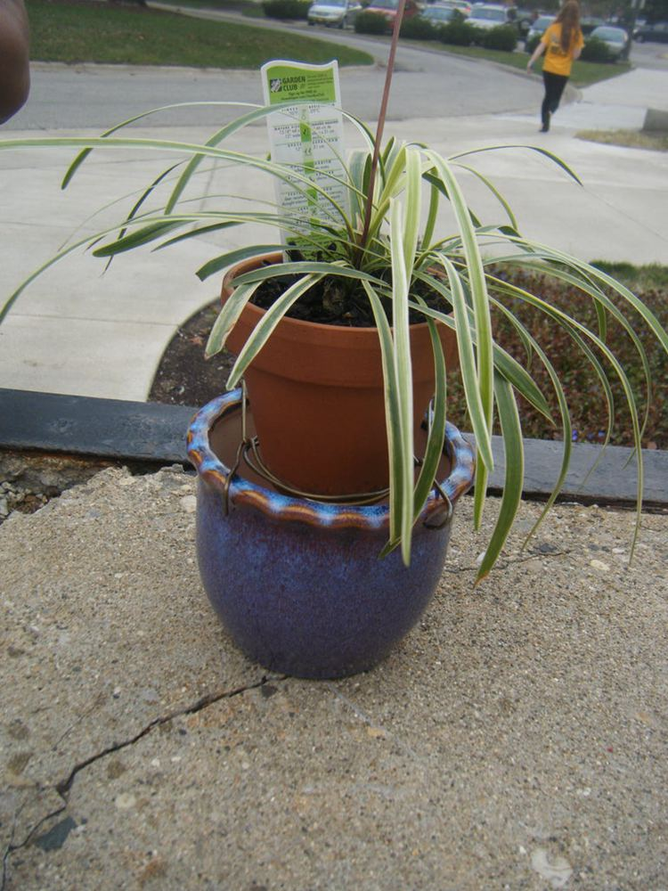 3. How To Make A Self Watering Planter