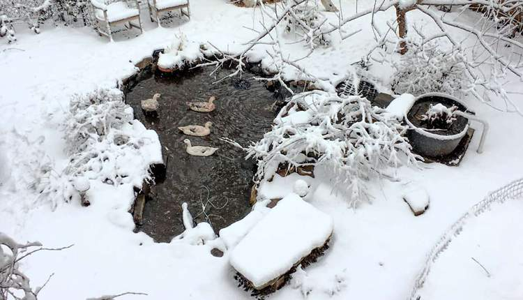 5. How To Build A Backyard Pond With DIY Bio-Filter