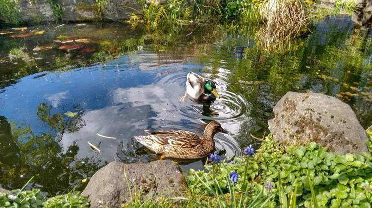 6. How To Build A Duck Pond