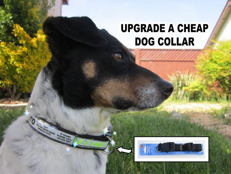 6. How To Upgrade A Cheap Dog Collar