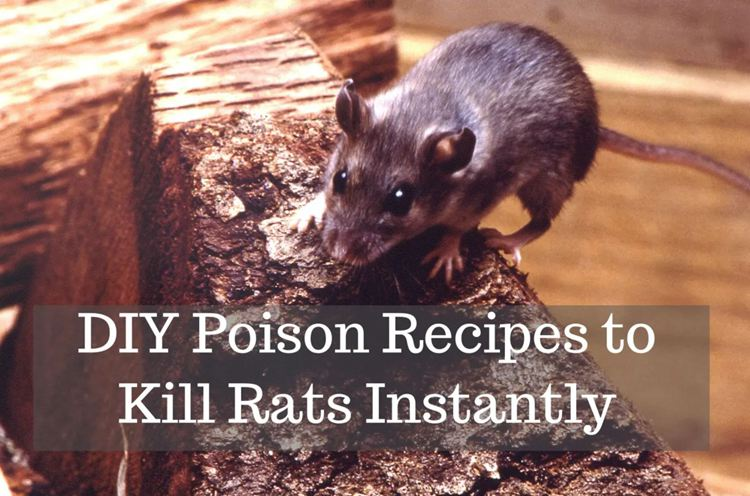6. Instant Rat Poison Recipes