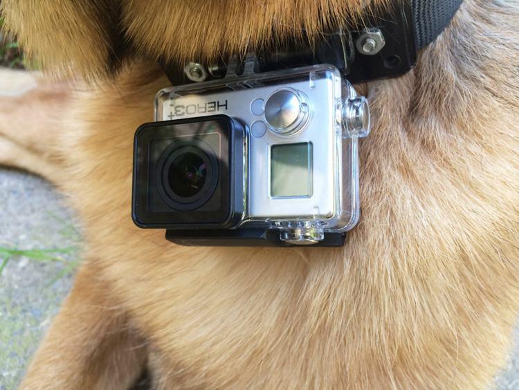 7. DIY Gopro Dog Collar