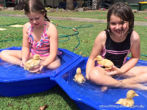 8. DIY Duck Pond Using Recycled Materials