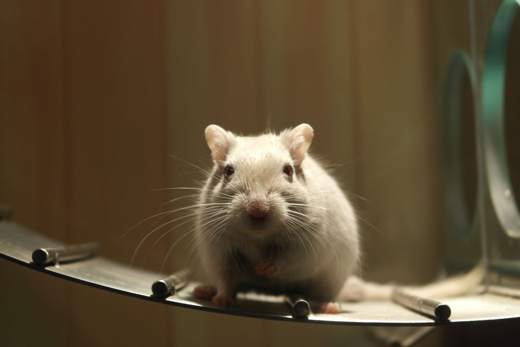 8. Standard Mouse Poisons