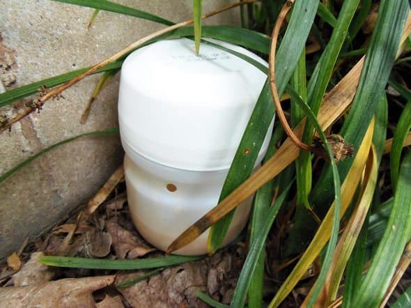 9. Outdoor Ant Bait Trap