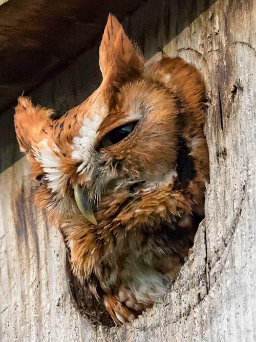 DIY Owl House Plans